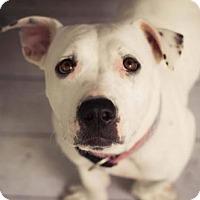 Adopt A Pet :: Joni - Houston, TX