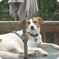 Adopt A Pet :: Sierra - Gainesville, GA