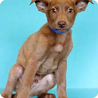 Adopt A Pet :: Jeffery - Waldorf, MD
