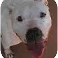 Adopt A Pet :: Pearl - Blanchard, OK
