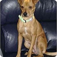 Adopt A Pet :: Prince - Scottsdale, AZ
