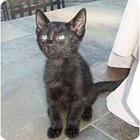 Adopt A Pet :: Tabitha - New Egypt, NJ
