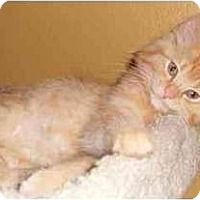 Adopt A Pet :: Colby - Portland, OR