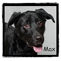 Adopt A Pet :: Max - Warren, PA