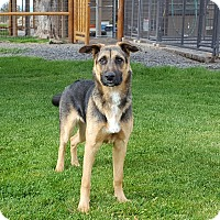 Adopt A Pet :: Bailee - Active Dog - Bend, OR
