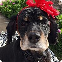 Adopt A Pet :: Candy - Santa Barbara, CA