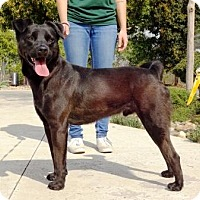 Adopt A Pet :: Nitro - Lathrop, CA