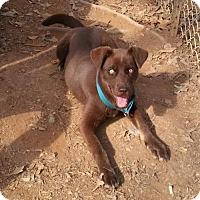 Adopt A Pet :: Cheri - Loganville, GA