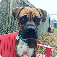 Adopt A Pet :: Jenny - Seattle, WA