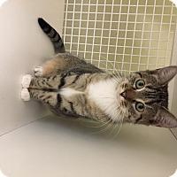 Adopt A Pet :: Jackie - San Antonio, TX