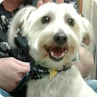 Adopt A Pet :: Eli - Dallas, TX