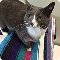 Adopt A Pet :: Misty - Tioga, PA