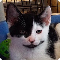 Adopt A Pet :: Dill - Grants Pass, OR