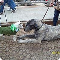 Adopt A Pet :: Snookie - Wisconsin Dells, WI