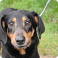 Adopt A Pet :: Moe - Albany, NY