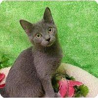 Adopt A Pet :: Layla - Mobile, AL