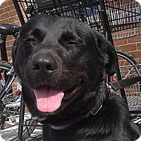 Adopt A Pet :: Abbott - Richmond, VA