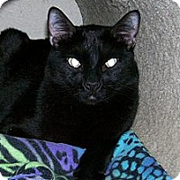 Adopt A Pet :: Carelton - Scottsdale, AZ