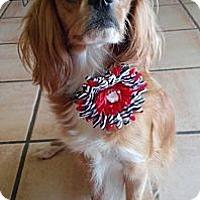 Adopt A Pet :: Queenie - Encinitas, CA