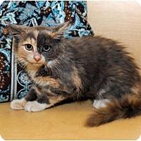 Adopt A Pet :: Isabel - Farmingdale, NY