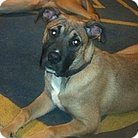 Adopt A Pet :: Eve - Morgantown, WV