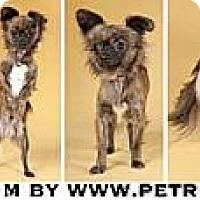 Adopt A Pet :: William - Chicago, IL