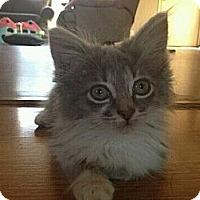 Adopt A Pet :: Tennille - Grand Rapids, MI