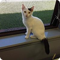 Adopt A Pet :: Lucy - Lake Charles, LA