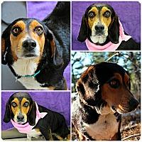 Adopt A Pet :: Ellie - Forked River, NJ