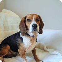 Adopt A Pet :: Toby T - Homewood, AL
