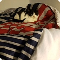 Adopt A Pet :: Boi (FCID # 12/01/2016-18 Foster Home) - Greenville, DE
