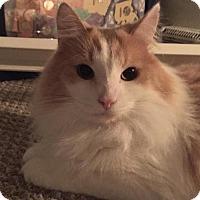 Adopt A Pet :: Zack - Sharon Center, OH