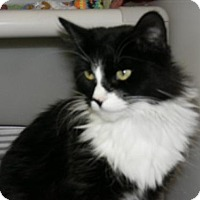 Adopt A Pet :: Pinta - Milwaukee, WI