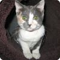 Adopt A Pet :: Maddie - Powell, OH