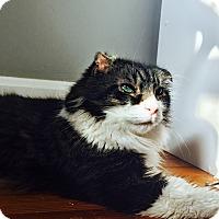 Adopt A Pet :: Coalson - Cincinnati, OH