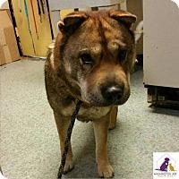 Adopt A Pet :: Nina - Eighty Four, PA