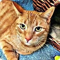 Adopt A Pet :: Betsy - Oak Park, IL