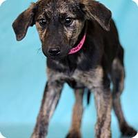 Adopt A Pet :: Morrisette - Waldorf, MD