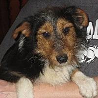 Adopt A Pet :: Cookie - Greenville, RI