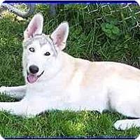 Adopt A Pet :: Mykah - Hamilton, ON