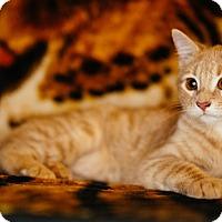 Adopt A Pet :: Rufina - St. Louis, MO