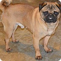 Adopt A Pet :: Magic - Prole, IA