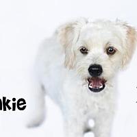 Adopt A Pet :: Frankie - Castaic, CA
