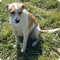 Adopt A Pet :: Megz - Avon, NY