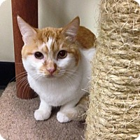 Adopt A Pet :: Kringle (Cat BFF!) - Santa Ana, CA