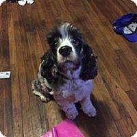 Adopt A Pet :: Harold - Rexford, NY
