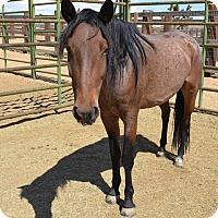 Adopt A Pet :: Bocaccio - Lancaster, CA