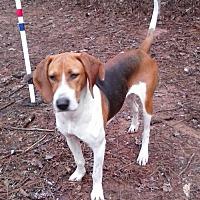 Adopt A Pet :: Leigh - Ellijay, GA