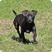 Adopt A Pet :: Zion - Savannah, TN