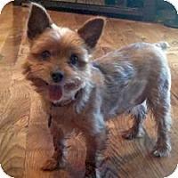 Adopt A Pet :: Gizzy - Ashland City, TN